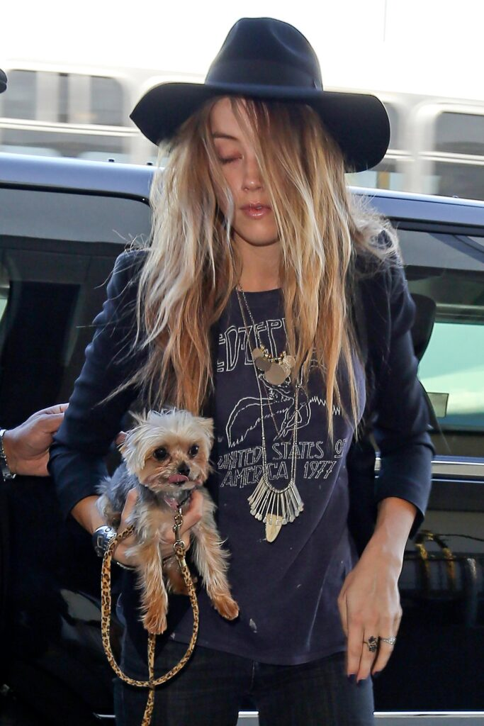 Amber Heard with her two Yorkshire terriers: Pistol and Boo.